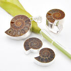 100% Genuine Natural Ammonite Fossil Gems Silver Pendant Earrings Ring Sz 7 8 9