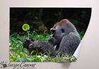 GORILLA IN GRASS GIANT WALL ART POSTER A0 A1 A2 A3