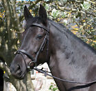 SALE Rhinegold 'Elegance' Stitched German Leather Bridle With Flash Noseband