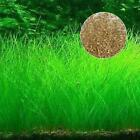 Fish Tank Aquarium Plant Seeds Aquatic Water Grass  Garden Foreground Plant BD