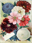 Cosmos & Zinnias ~ Vintage Seed Catalog Art ~Cross Stitch Pattern