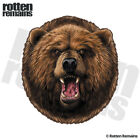 Bear Decal Grizzly Hunter Kodiak Hunting Alaska Window Gloss Sticker HGV