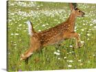 White Tailed Deer Fawn In Field Of Canvas Wall Art Print, Deer Home Decor
