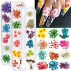 12 Colors Real Dried Flowers 3d Nail Art Decors Design Diy Tips Manicure Usa