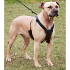 NON-PULL HARNESS - A MUST FOR DOGS THAT PULL! 3 SIZES - SPORN COMPANY OF ANIMALS