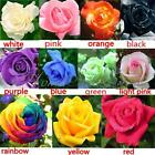 50Pcs Beautiful Rose Flower Seeds Your Lover Multi-color Plant Home Garden