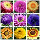 36kind Garden Flower Seeds African Daisy Aster Fragrant Compositae Chrysanthemum