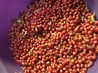 Hardy Fruit Plant & Tree Seeds -You Can Choose The Variety You Want