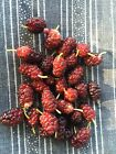 You Can Choose The Variety You Want -Fruiting Plant & Tree Seeds