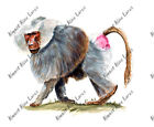 AFRICAN WILD BABOON JUNGLE ZOO MONKEY VINYL WINDOW AUTO RV DECAL STICKER ART