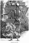 ML52 Vintage Medical Anatomy Human Body Skeleton Back Albinus Poster A2/A3/A4
