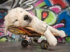 Vlies Tapete / XXL Poster * Skateboard Puppy Hund / Grafitti *