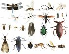 College Level School Entomology Insect Bug Specimens Choose Species Dead Bugs