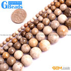 "Natural Stone Coral Fossil Round Beads Free Shipping 15"" 4mm 6mm 8mm 10mm 12mm"