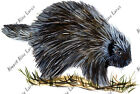 Porcupine Sticker Decal Quality Wildlife Outdoor Nature Boating Camp Woods Wild