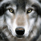 Grey Wolf Portrait by Sarah Stribbling Art Print Poster - Wildlife Country Lodge