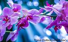Orchids (3) - Poster in 3 Sizes
