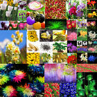 Fruit Vegetables Various Ideal Home Garden Potted Seed Rare Flower Plant Seeds