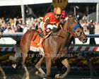"""Looking At Lucky 2010 Preakness Stakes Photo 8"""" x 10 - 24"""" x 30"""""""