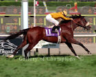 """Lure 1993 Breeders' Cup Mile Photo 8"""" x 10 - 24"""" x 30"""""""