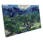 Vincent van Gogh The Olive Trees Reproduction Ready to Hang Canvas IE242