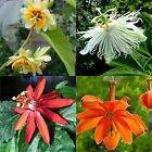 4 very rare passiflora varieties, 10 or 50 seeds