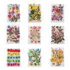 25x Lots Mixed Real Pressed Leaves Dried Flowers DIY Phone Cover Candle Soap