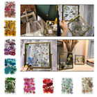 Mixed Pressed Dried Flowers Dry Leaves for DIY Crafts Bookmark Cards Making
