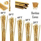 Thick Quality Heavy Duty Strong Bamboo Canes Garden Plant Support Pole Sticks Uk
