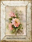 Old Garden Roses Soft PINK ANTIQUE ROSES w/  DAISIES  Cottage Vintage ART PRINT