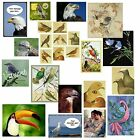 Choose Bird Picture Magnet Parakeet Dove Hawk Eagle Gull Pigeon Songbird