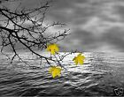 Yellow Gray Wall Art/ Leaves On Tree Branch Lake Home Decor Picture (Options)