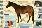 New Points of the Horse Equine Care Mini Poster