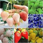 1Pack Rare Delicious Strawberry Seeds Vegetables Fruits Seeds Garden Farm Blue