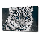 LARGE SNOW LEOPARD CANVAS PRINT EZ1286