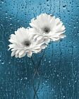 Blue Gray Daisy Flowers Bathroom Home Decor Wall Art Matted Picture