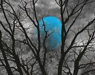 Moon Wall Pictures, Blue Moon, Tree Moon Blue Gray Bedroom Matted Wall Art