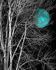 Black White Teal Moon Tree Modern Bedroom Wall Art Matted Picture