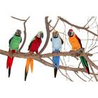 Hansa 3327 Parrots 7 in. Assorted 4 Colors -Pack of 4