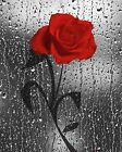 Red Gray Rose Flower Raindrops Bathroom Bedroom Wall Art Home Decor Picture