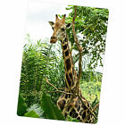 African Giraffe Large Fridge Magnet