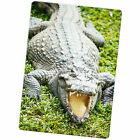 Crocodiles & Alligators Large Fridge Magnet
