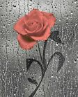 Coral Rose Flower Decorative Bathroom Wall Art Home Decor Matted Picture