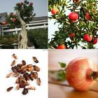 20pcs/Bag Pomegranate Seeds Home Garden Planting Delicious Fruit Tree N98B