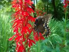 List of Over 45 Butterfly Attracting Flower Seed Varieties and Mixes
