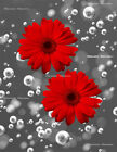 Red Gray Wall Art, Red Daisy Flower Modern Bathroom, Bedroom Wall Art Picture