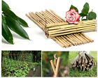 Strong Bamboo Cane Plant Ties Vegetable Support Sticks Poles 2,3,4,5,6 & 7 Feets