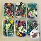 1-box Real Pressed Dried Flowers Diy For Art Craft Resin Pendant Jewelry Making