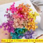 Natural Plants Home Decor Floral Bouquets Mini Daisy Small Star Dried Flowers
