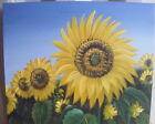 "SUNFLOWERS FLOWER ART OIL PAINTING 20x24"" STRETCHED"